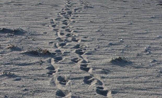 Riformulare la Chiesa: un cammino urgente e necessario