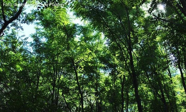 Un albero piantato per ogni italiano. Iniziativa per combattere la crisi climatica