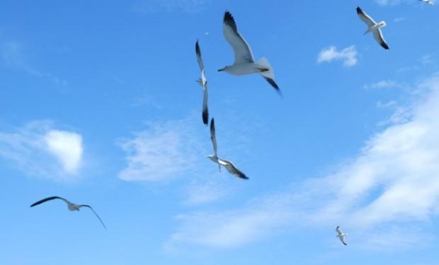 Spiritualità ecologica, terreno d'incontro tra le fedi
