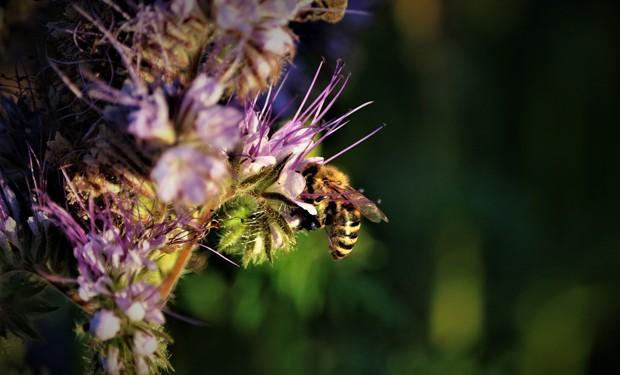 Parole importanti, azioni conseguenti: il WWF in vista della Cop15 sulla Biodiversità