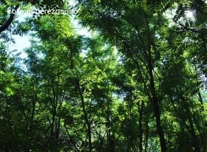 Dagli alberi la vita. Per mettere radici, un convegno in quel di Vicenza