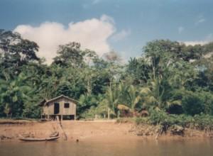 Querida amazonia: il papa «mette la testa sotto la sabbia». Il giudizio severo della teologa Simonelli